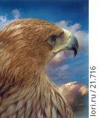 Купить «Орел, смотрящий вперед», фото № 21716, снято 3 июля 2020 г. (c) Александр Тараканов / Фотобанк Лори