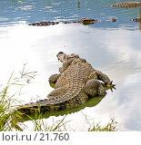 Купить «Вьетнам. Крокодил», фото № 21760, снято 11 февраля 2007 г. (c) Валерий Ситников / Фотобанк Лори