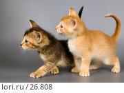 Купить «Котята в студии», фото № 26808, снято 17 марта 2007 г. (c) Vladimir Suponev / Фотобанк Лори