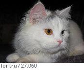 Купить «Кошка», фото № 27060, снято 11 декабря 2006 г. (c) Талдыкин Юрий / Фотобанк Лори