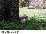 Купить «Белка семечки грызет», фото № 29344, снято 18 марта 2007 г. (c) Михаил Баевский / Фотобанк Лори