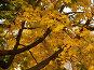 Осенний клен, фото № 31720, снято 7 октября 2006 г. (c) Крупнов Денис / Фотобанк Лори