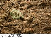 Купить «Кора баобаба», фото № 31752, снято 16 апреля 2007 г. (c) Eleanor Wilks / Фотобанк Лори