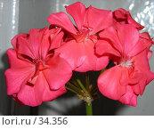 Купить «Цветы», фото № 34356, снято 31 марта 2007 г. (c) Сергей / Фотобанк Лори