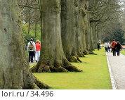 Прогулка в лесу великанов в Кеукенхофе, Голландия (2007 год). Стоковое фото, фотограф Demyanyuk Kateryna / Фотобанк Лори