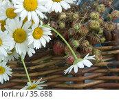 Купить «Ромашки и клубника в корзине», фото № 35688, снято 23 июля 2006 г. (c) Ирина Солошенко / Фотобанк Лори