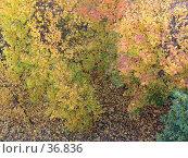 Купить «Осень дала о себе знать», фото № 36836, снято 2 октября 2005 г. (c) Андрей Яшин / Фотобанк Лори