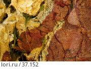 Купить «Разноцветные камни и морские водоросли. Скала на отливе.», фото № 37152, снято 24 мая 2007 г. (c) Eleanor Wilks / Фотобанк Лори