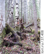 Купить «Лесной ландшафт», фото № 37408, снято 28 мая 2006 г. (c) Маря / Фотобанк Лори