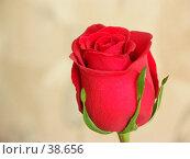 Купить «Роза», фото № 38656, снято 22 апреля 2007 г. (c) Куприянов Евгений / Фотобанк Лори