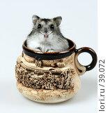 Купить «Джунгарский хомячок сидит в глиняной сувенирной кружке», фото № 39072, снято 18 марта 2007 г. (c) Сергей Лешков / Фотобанк Лори