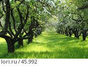 Купить «Цветущий яблоневый городской сад», фото № 45992, снято 19 мая 2007 г. (c) Татьяна Белова / Фотобанк Лори