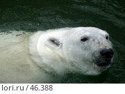 Купить «Белый медведь», фото № 46388, снято 9 июля 2005 г. (c) Морозова Татьяна / Фотобанк Лори