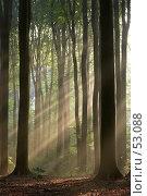 Купить «Мистический лес, сфотографированный ранним осенним утром. Сквозь изображение проходят солнечные лучи.», фото № 53088, снято 6 июля 2020 г. (c) Михаил Лавренов / Фотобанк Лори