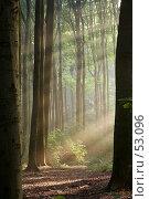 Купить «Мистический лес в осеннюю пору», фото № 53096, снято 22 мая 2018 г. (c) Михаил Лавренов / Фотобанк Лори