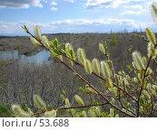 Купить «Цветущая ветка», фото № 53688, снято 10 июня 2007 г. (c) Maxim Kamchatka / Фотобанк Лори