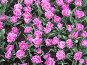 """Тюльпаны, Ботанический сад МГУ """"Аптекарский огород"""", эксклюзивное фото № 54420, снято 9 мая 2007 г. (c) Татьяна Юни / Фотобанк Лори"""