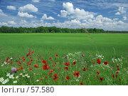 Купить «Родная земля», фото № 57580, снято 25 мая 2018 г. (c) Игорь Соколов / Фотобанк Лори