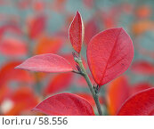 Купить «Красные листья золотой осени», фото № 58556, снято 22 октября 2004 г. (c) Юрий Синицын / Фотобанк Лори