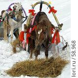 Купить «Блинная масленица», фото № 58968, снято 18 февраля 2007 г. (c) Евдокимова Мария Борисовна / Фотобанк Лори