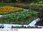 Купить «Клумба», фото № 59940, снято 5 июля 2007 г. (c) Дмитрий Карасев / Фотобанк Лори