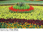 Купить «Клумба», фото № 59956, снято 5 июля 2007 г. (c) Дмитрий Карасев / Фотобанк Лори