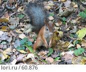 Купить «Белка на земле», фото № 60876, снято 1 октября 2006 г. (c) Snowcat / Фотобанк Лори