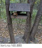 Купить «Белка, выглядывающая из кормушки», фото № 60880, снято 1 октября 2006 г. (c) Snowcat / Фотобанк Лори