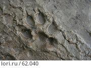 Купить «Отпечаток лапы собаки на мокром песке», фото № 62040, снято 15 июля 2007 г. (c) Ханыкова Людмила / Фотобанк Лори
