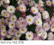 Купить «Цветы», эксклюзивное фото № 62316, снято 14 августа 2005 г. (c) Михаил Карташов / Фотобанк Лори