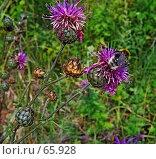 Купить «Летние цветы», фото № 65928, снято 14 августа 2018 г. (c) Вадим Кондратенков / Фотобанк Лори