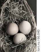 Купить «Три яйца», фото № 66040, снято 6 марта 2007 г. (c) Морозова Татьяна / Фотобанк Лори