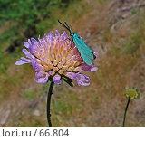 Купить «Голубой мотылек», фото № 66804, снято 14 августа 2018 г. (c) Вадим Кондратенков / Фотобанк Лори