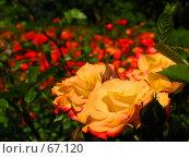 Купить «Цветочная клумба -  живая открытка», фото № 67120, снято 12 июня 2004 г. (c) Harry / Фотобанк Лори