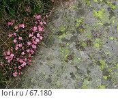 Купить «Трава, полевые цветы, и лишайники на камне», фото № 67180, снято 26 июня 2004 г. (c) Harry / Фотобанк Лори
