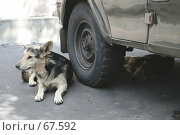 Купить «Бродячие собаки на отдыхе», фото № 67592, снято 30 июля 2007 г. (c) Юлия Смольская / Фотобанк Лори