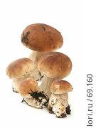 Купить «Много белых грибов на белом фоне», фото № 69160, снято 26 июля 2007 г. (c) Останина Екатерина / Фотобанк Лори