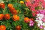 Клумба с цветами, фото № 71264, снято 10 августа 2007 г. (c) Ильин Сергей / Фотобанк Лори