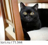 Кот на стуле. Стоковое фото, фотограф дмитрий / Фотобанк Лори