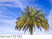 Купить «Пальма на фоне голубого неба», фото № 72152, снято 22 июля 2007 г. (c) Александр Чермянин / Фотобанк Лори