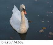 Купить «Лебедь», фото № 74668, снято 1 марта 2005 г. (c) Елена Яковенко / Фотобанк Лори