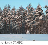 Купить «Сосновый бор зимой», фото № 74692, снято 23 июня 2005 г. (c) Елена Яковенко / Фотобанк Лори