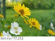 Купить «Желтые цветы», фото № 77212, снято 22 мая 2018 г. (c) Игорь Соколов / Фотобанк Лори
