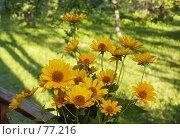 Купить «Желтые цветы», фото № 77216, снято 22 мая 2018 г. (c) Игорь Соколов / Фотобанк Лори