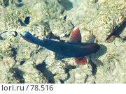 Купить «Рыбы Красного моря», фото № 78516, снято 21 августа 2007 г. (c) Лифанцева Елена / Фотобанк Лори