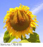 Купить «Место под Солнцем», фото № 78616, снято 11 августа 2007 г. (c) Анатолий Теребенин / Фотобанк Лори