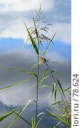Купить «Трава над водой», фото № 78624, снято 2 сентября 2007 г. (c) Анатолий Теребенин / Фотобанк Лори