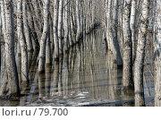Тополиная роща в талой воде. Стоковое фото, фотограф Круглов Олег / Фотобанк Лори
