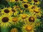 Желтые цветы, фото № 80600, снято 13 июля 2007 г. (c) Наталья Волкова / Фотобанк Лори