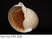 Купить «Морская раковина», фото № 81320, снято 5 сентября 2007 г. (c) Олег Безручко / Фотобанк Лори